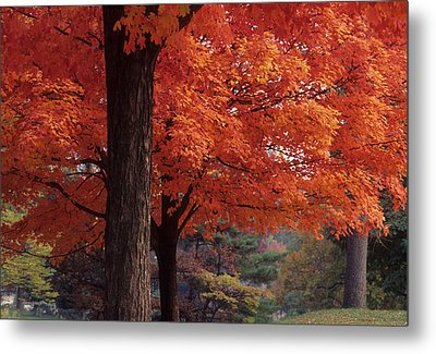 Druid Park -- Baltimore-maryland Metal Print by Harold E McCray