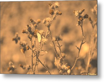 Dusty Desert  Metal Print