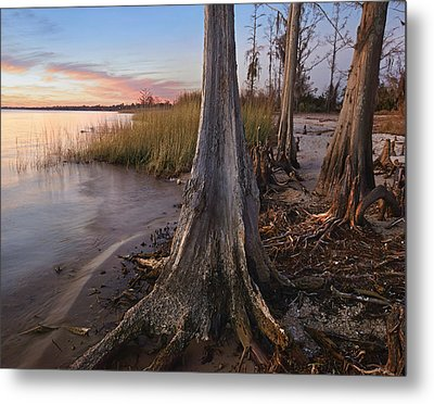 Dwarf Cypress Trees Lake Pontchartrain Metal Print