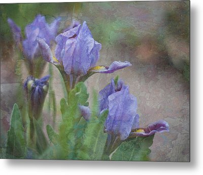 Metal Print featuring the photograph Dwarf Iris With Texture by Patti Deters