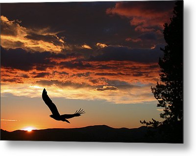 Eagle At Sunset Metal Print by Shane Bechler