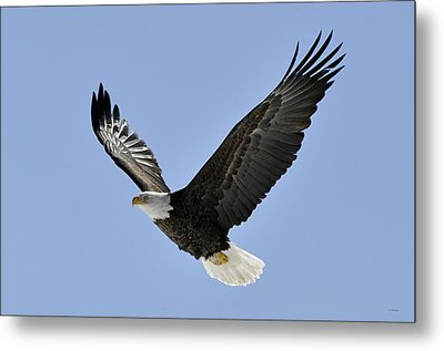 Eagle Class Metal Print by RJ Martens