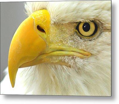 Eagle Eye Metal Print by Shane Bechler