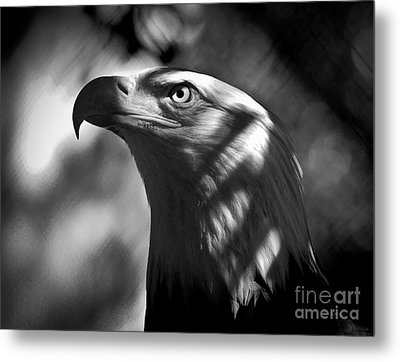 Eagle In Shadows Metal Print by Robert Frederick