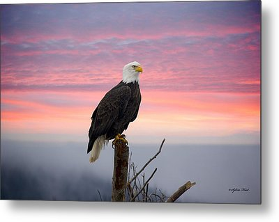 Eagle In The Mist Metal Print by Sylvia Hart