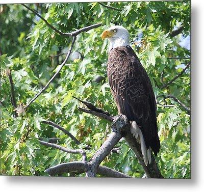 Eagle Lookout.  Metal Print