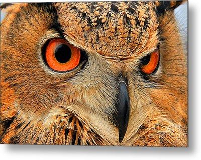 Eagle Owl Metal Print by Leslie Kirk