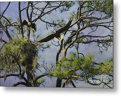Eagle Pair And Nest Metal Print by Deborah Benoit