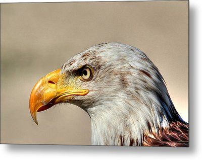 Eagle Profile Metal Print by Larry Trupp