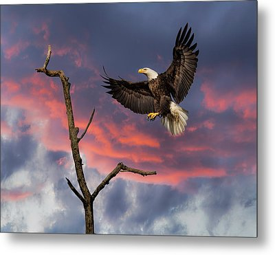 Eagle Sunset Landing Metal Print