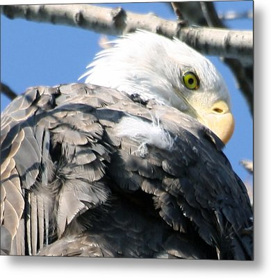 Eagle Metal Print by Valerie Wolf