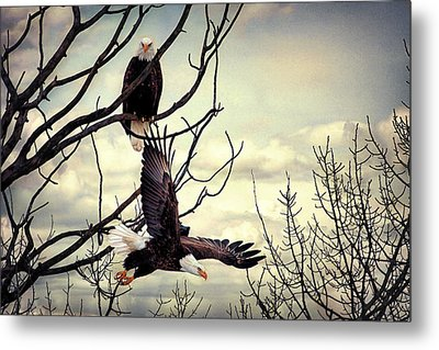 Eagle Watching Eagle Metal Print by Gary Smith