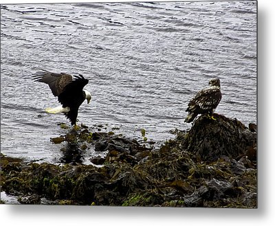 Metal Print featuring the photograph Eagle7 by Timothy Latta