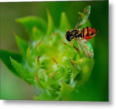 Early Arrival Metal Print by Frozen in Time Fine Art Photography