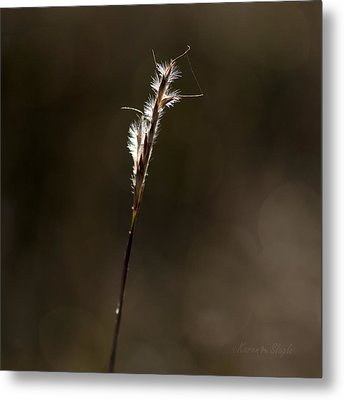 Metal Print featuring the photograph Early Autumn by Karen Slagle