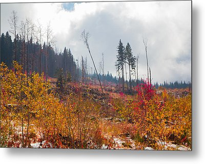 Metal Print featuring the photograph Early Autumn Yellow Red Colored Mountain View by Jivko Nakev