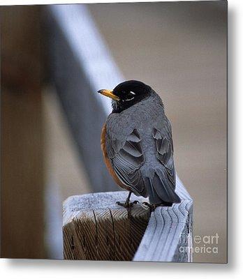 Early Bird Metal Print by Sharon Elliott
