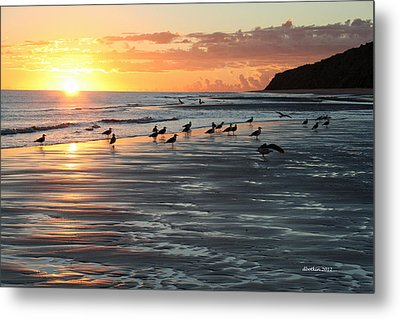 Metal Print featuring the photograph Early Birds by Dick Botkin