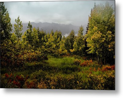 Metal Print featuring the photograph Early Fall On Kebler Pass by Ellen Heaverlo