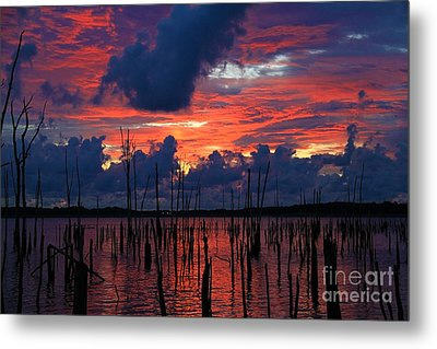 Early Light Metal Print by Roger Becker