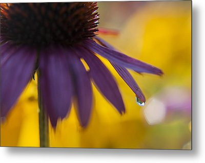 Early Morning Dew Drops Metal Print