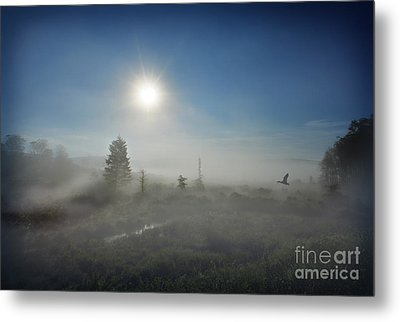 Early Morning Fog At Canaan Valley Metal Print by Dan Friend