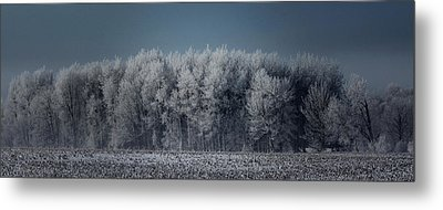 Early Morning Frost Metal Print by Sarah Boyd