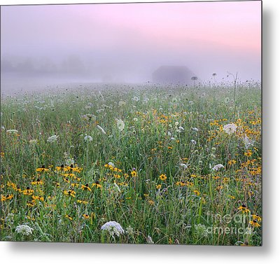 Early Morning Meadow Metal Print