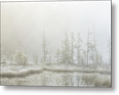 Early Morning Mist Over A Small Pond Metal Print by Robert Postma