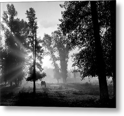 Early Morning Myst And A Horse Metal Print