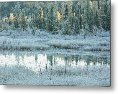 Early Morning Over Costello Creek Metal Print
