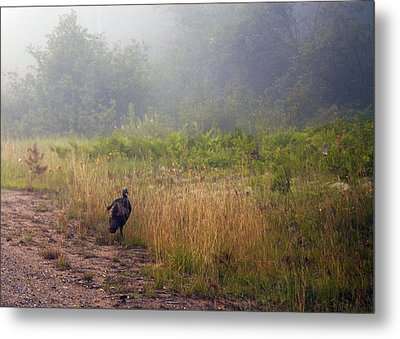 Early Morning Strole Metal Print by Ron Haist