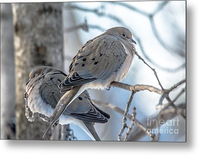 Early Mourning Metal Print by Cheryl Baxter