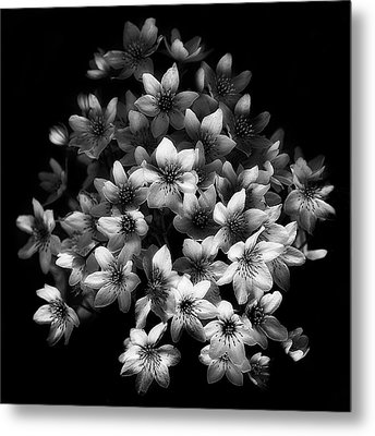 Early Sensation Metal Print