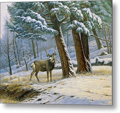 Early Snow- Mule Deer Metal Print