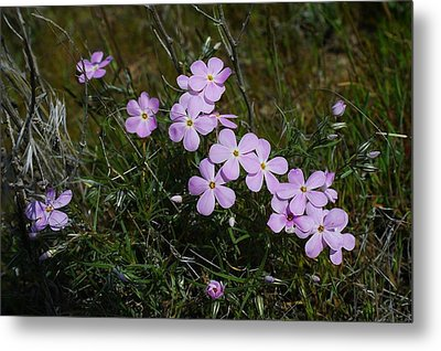 Early Spring Blossoms Metal Print