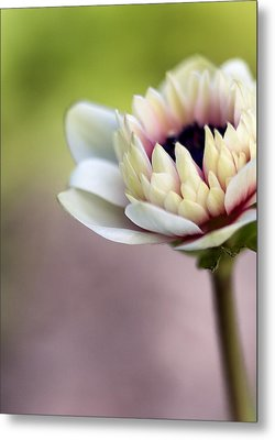 Early Spring  Metal Print by Caitlyn  Grasso