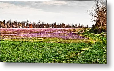 Metal Print featuring the photograph Early Spring Field by Greg Jackson