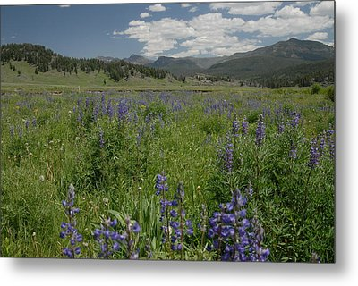Early Spring In Yellowstone Metal Print by Larry Moloney