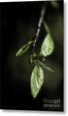 Early Spring Leaves Metal Print
