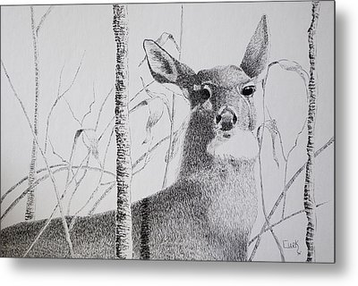 Early Winters Whitetail Metal Print