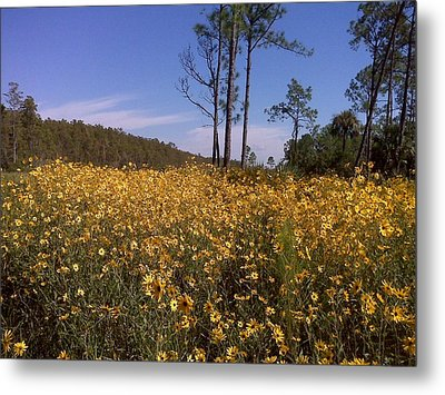 East Coast Dune Sunflowers Metal Print