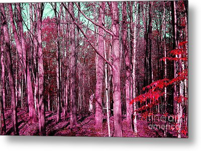 East Trail  Metal Print by Tina M Wenger