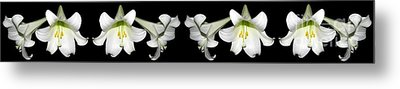 Easter Lilies Panorama Metal Print by Rose Santuci-Sofranko