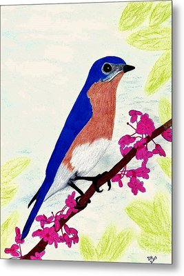 Metal Print featuring the drawing Florida - Eastern - Blue Bird by D Hackett
