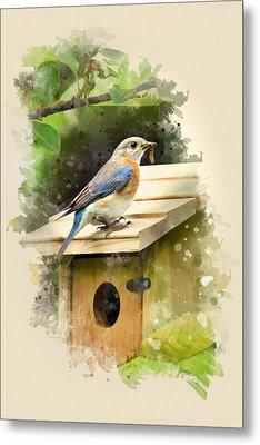 Eastern Bluebird Watercolor Art Metal Print