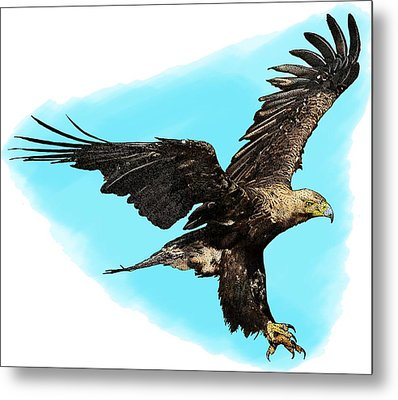 Eastern Imperial Eagle Metal Print by Roger Hall