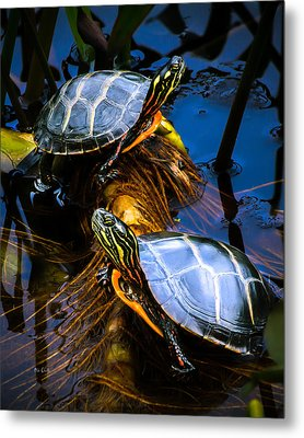 Eastern Painted Turtles Metal Print by Bob Orsillo