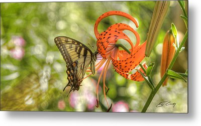 Eastern Tiger Swallowtail - Papilio Glaucus - Butterfly On Tiger Lily Metal Print
