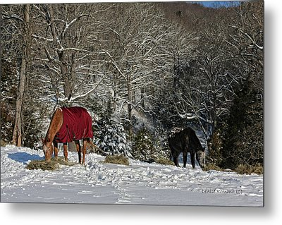Eating Hay In The Snow Metal Print by Denise Romano